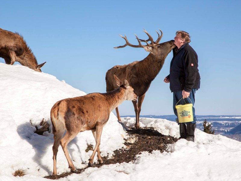 Hirsch Lenggries Winterwandern Freizeit Alpen