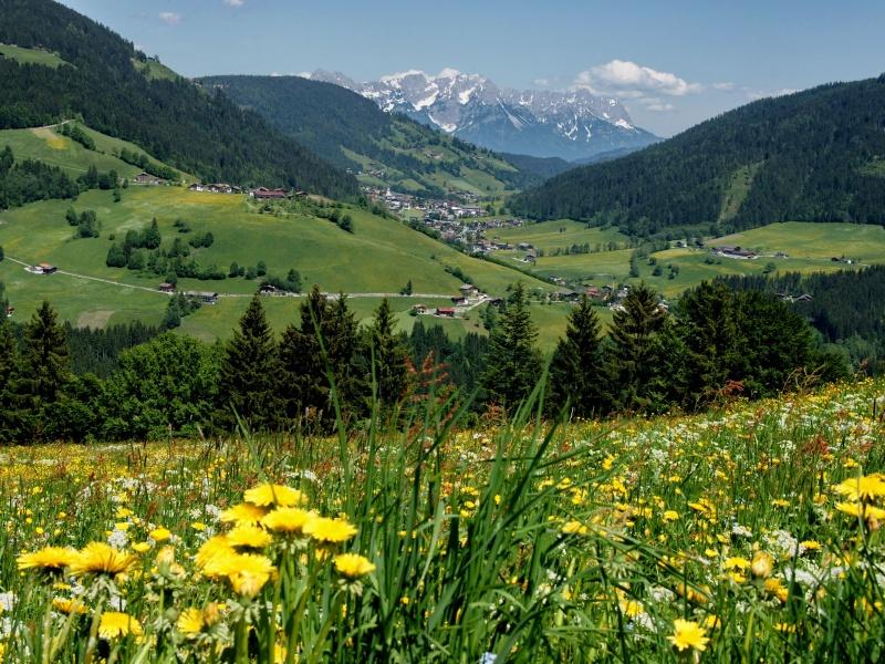 Blumenwiese und ALpen Berge Wildschönau