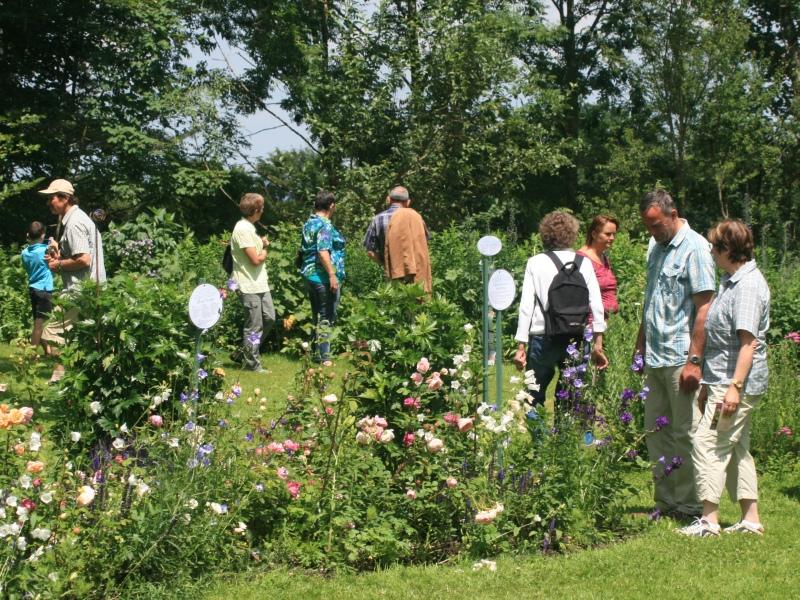 Besucher, Schaugarten, Blumen, Sommer, Begeisterung