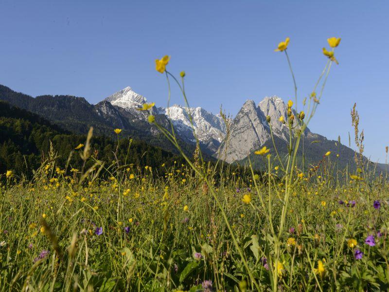 Berg Wiese Zugspitzmassiv