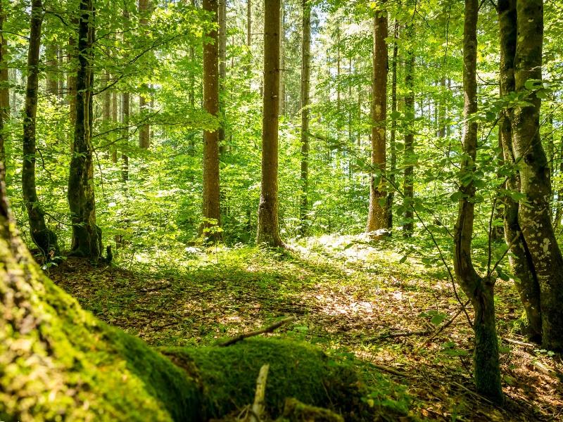 Wanderwege im Wald in Lenggries