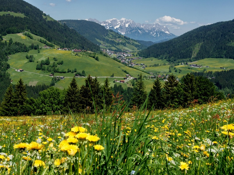 Frühlingswiese mit Blick ins Tal