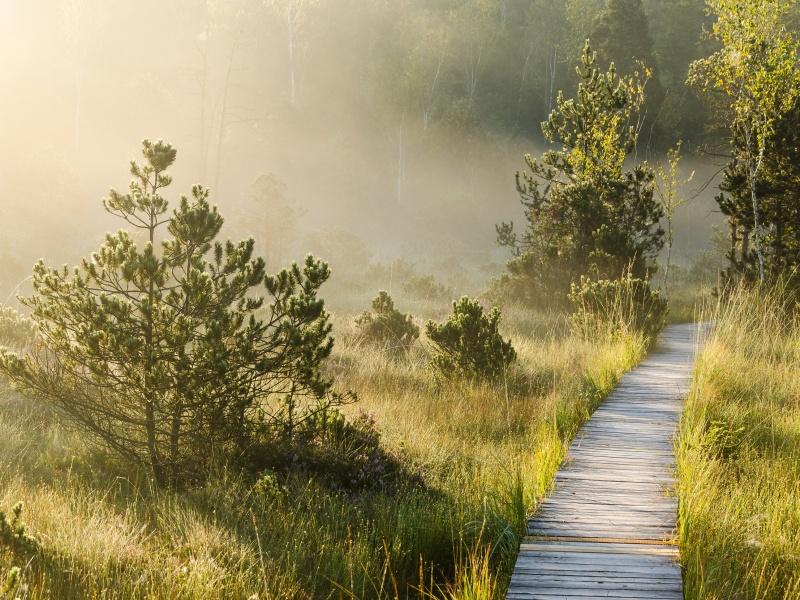 Holzsteg Weg durchs Moos
