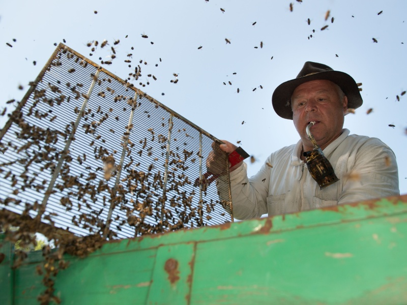 Imker im Bienenstock