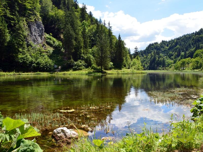 Wiesensee Wald