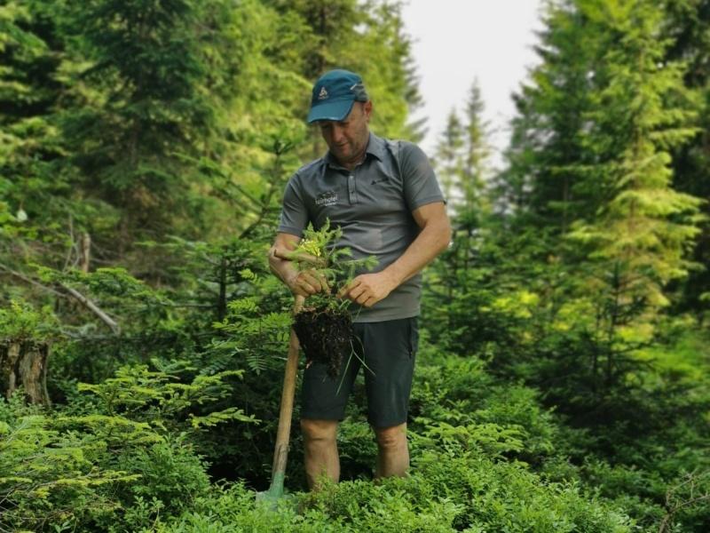 Waldarbeit Hans Eder