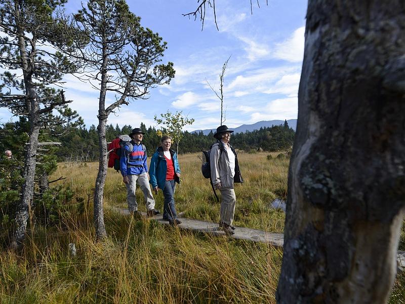 Bretterweg durchs Moor Wanderer