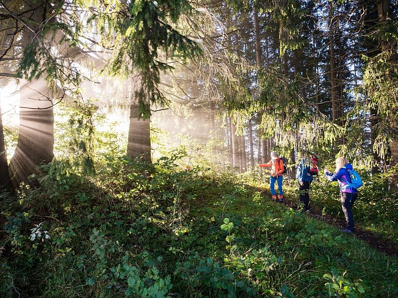 Herbstsonne im Wald Wanderer