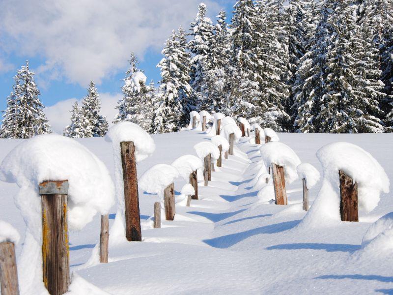 Winterwald im Pillerseetal