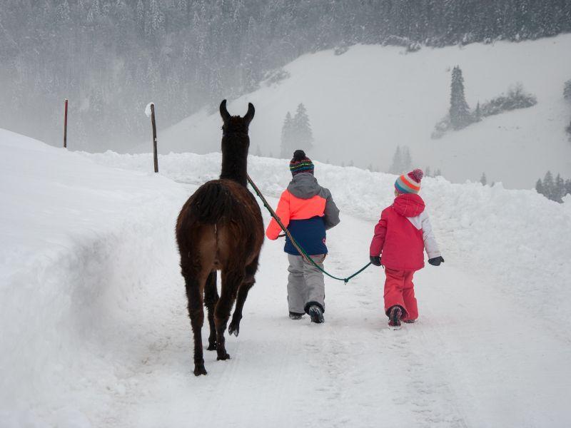 Lama mit 2 Kindern Gleichschritt