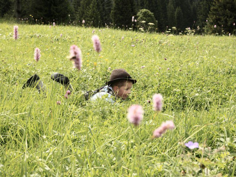 Junge liegt in Kräuterwiese