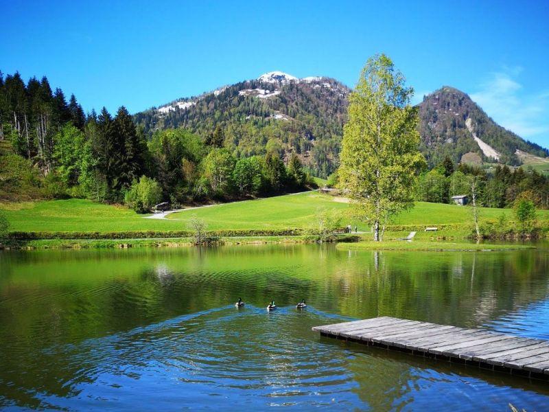 Lauchsee Fieberbrunn Sommer Enten